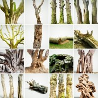 16 Forest Tree Collection 2