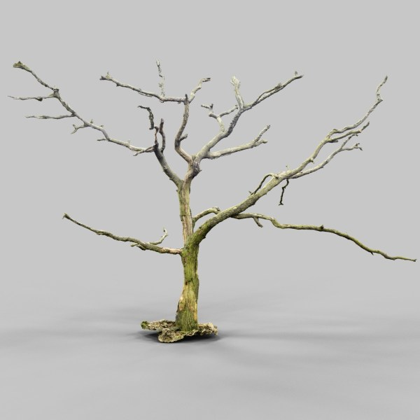 Lonesome Tree Model