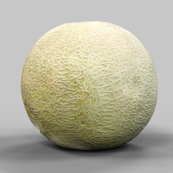 Melon 3D Model Fruit