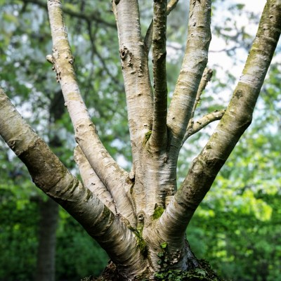 Photorealistic-3D-Scanned-Tree-Nature-Forest-Game-Unreal-Unity-Asset-Bark-Trunk-143
