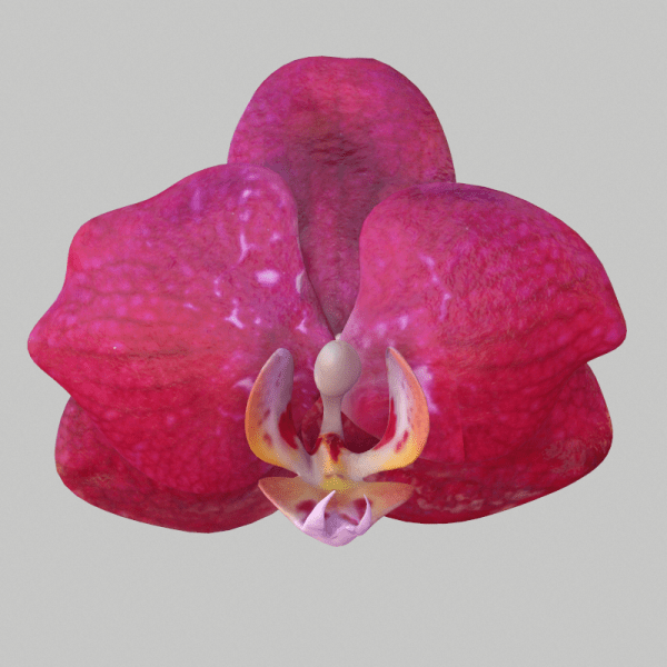 3D Scanned Orchid