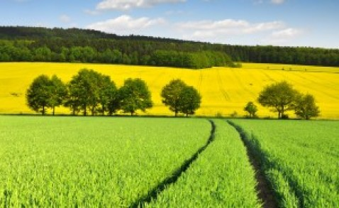 Fields of Abundance