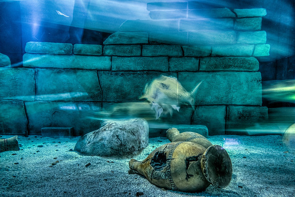 Fish, Ghost Fish, Sea Life Aquarium, Mall of America, Bloomington, Minnesota, HDR, Underwater