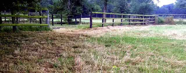 Rasen nach der Heu-Ernte