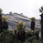 Frailejones, Sierra Nevada del Cocuy