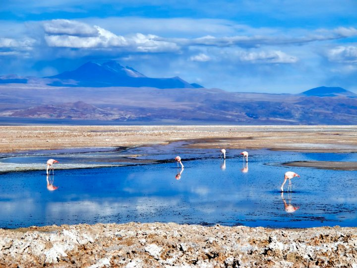 Flamingos in the Atacama (Photo: Dan Lundberg / Flickr)