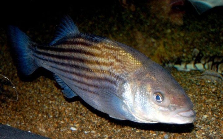 Dick Bass (Photo: Steven G. Johnson / Wikimedia Commons)