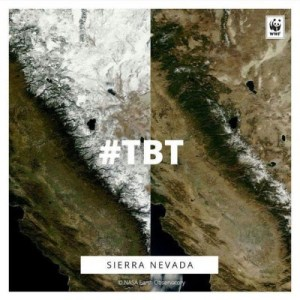 WWF TBT Sierra Nevada