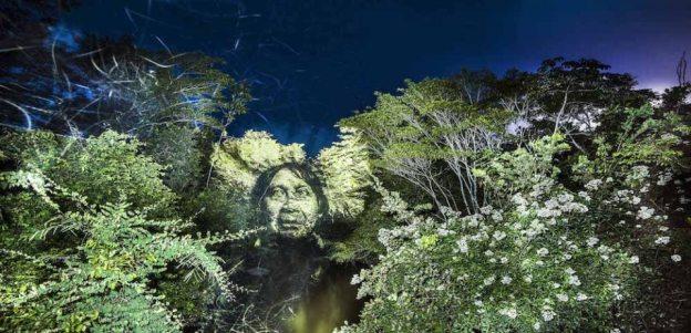 Philippe Echaroux Brazilian crying forest 4.jpg