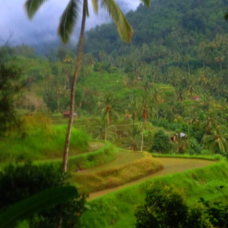 Rice Fields Mark My Adventure