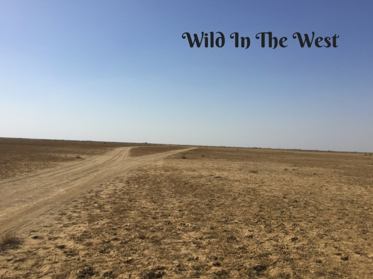 Wild In The West Mark My Adventure
