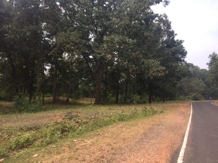 Jungle Kanha