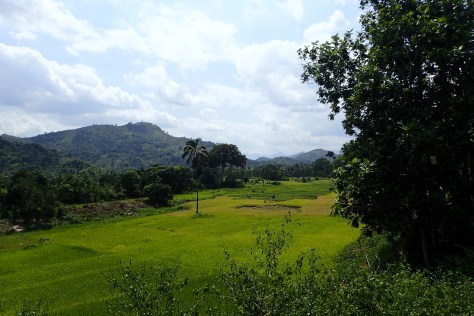 The park is surrounded by rice paddies and other agriculture