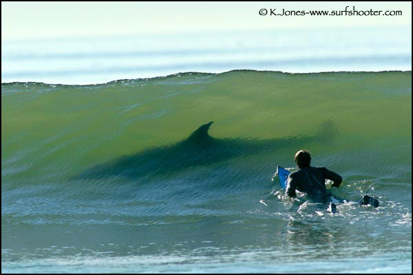 "//www.marktheshark.com/new/images/meet_marktheshark/Mark%20the%20Shark%20SURFING%20MAUI.jpg"" porque contiene errores."