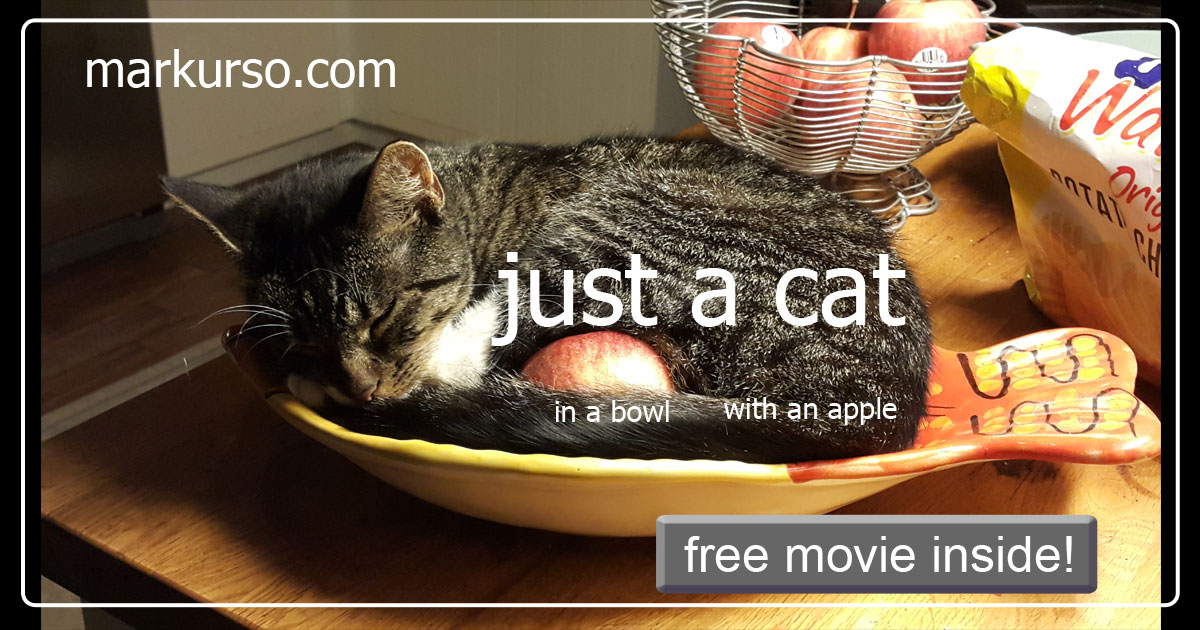 cat movie banner