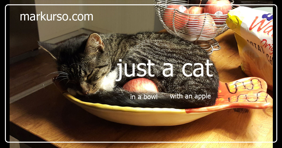 a cat in a bowl shaped like a fish with an apple