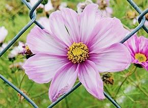 Blume in augenhoehe
