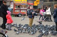 Tauben auf dem Dam Amsterdam