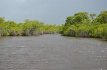 Grasslands Tour in den Everglades