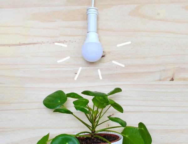 habitude-ecolo-plante