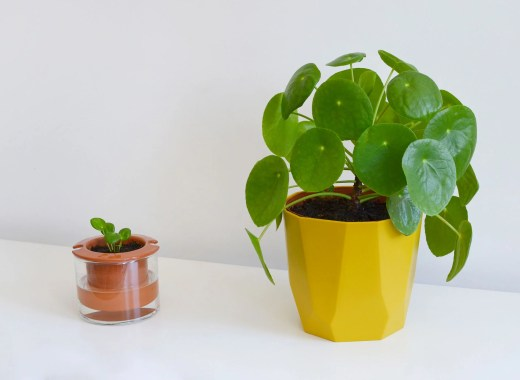 pilea-jungle-home-marmille