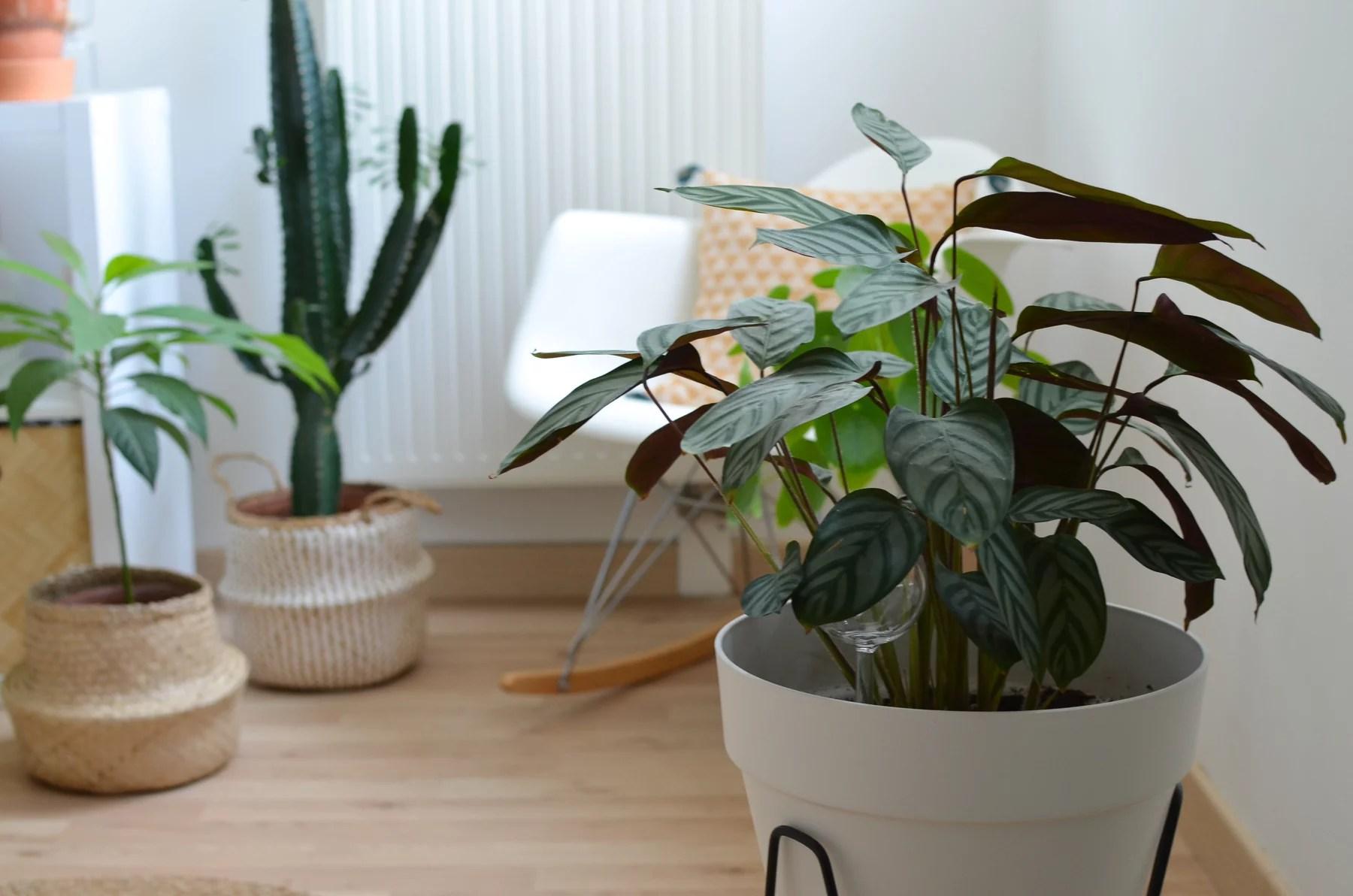 plante pot elho - Mes objets et accessoires design pour ma petite jungle urbaine