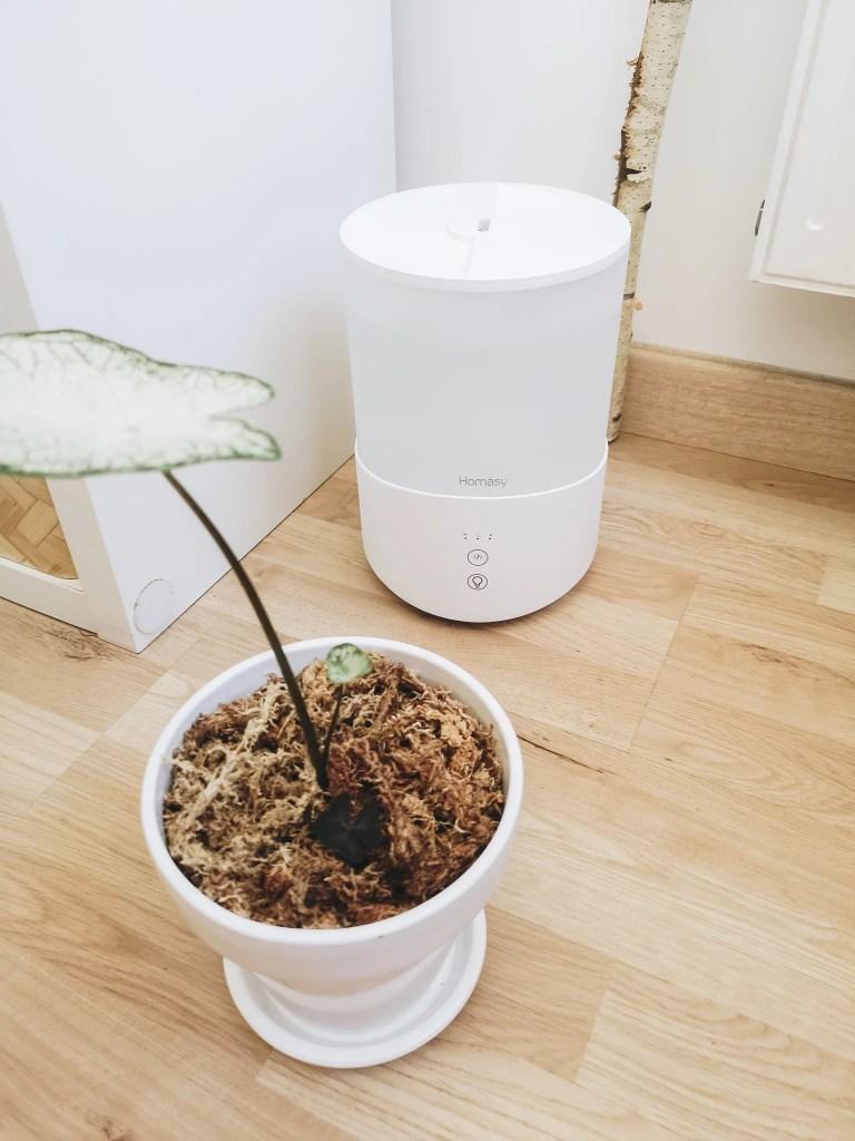 brumisateur humidificateur plante design blanc 2L marmille 768x1024 - Comment vivre les fortes chaleurs en appartement (chats et plantes)