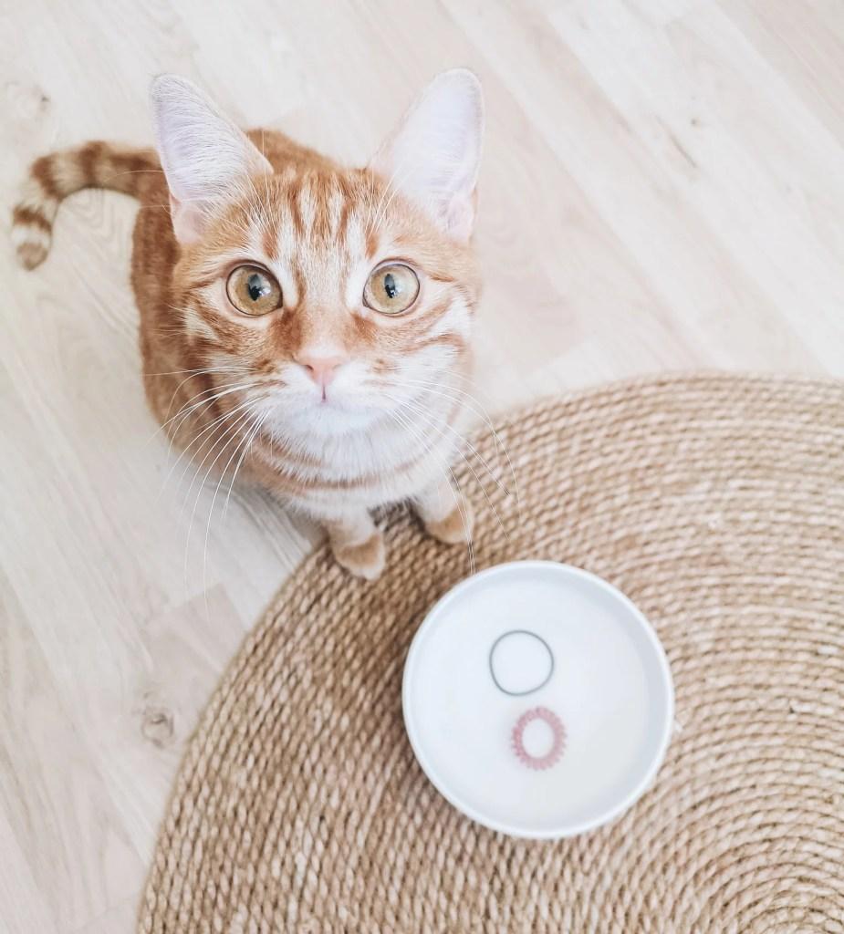 chats canicule fortes chaleurs astuces marmille copie 925x1024 - Comment vivre les fortes chaleurs en appartement (chats et plantes)