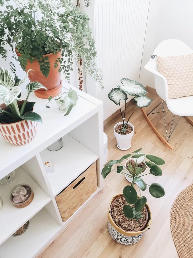 jungle home plante interieure humidificateur marmille 768x1024 - Comment vivre les fortes chaleurs en appartement (chats et plantes)