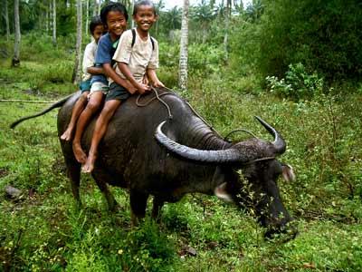 Riding Carabao