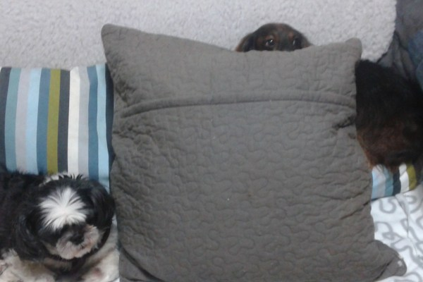 Housesit South Korea – First Experience