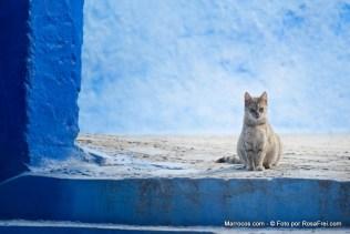 Gato na medina de Chefchaouen em Marrocos