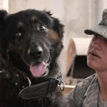Benefits Of Registering Your Service Dog