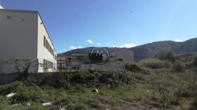 TOPI SCUOLA PERSIA B.GO ANGIZIA AZ (1)