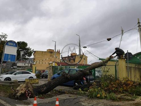 albero caduro moscardino