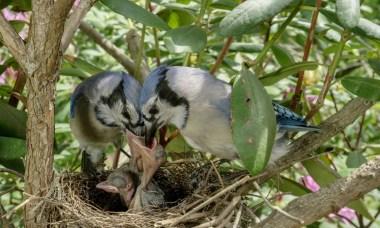 omniversum baby vogeltjes
