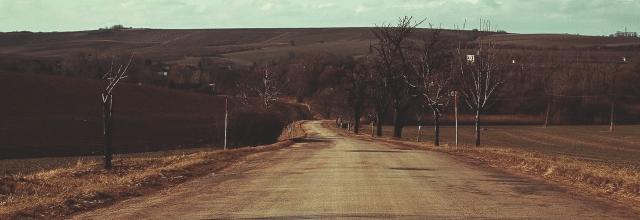 droga pusta asfalt jezdnia ulica drzewa