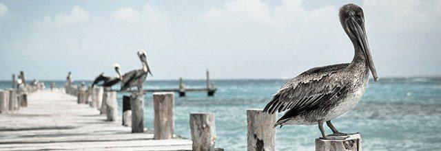 otywacja motywacyjne obrazki zdjęcia inspiracje cytaty jak spełniać marzenia dążyc do celu ptak mewa morze wakacje lato woda