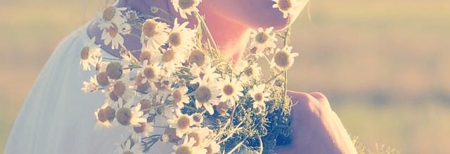 kwiaty stokrotki rumianek