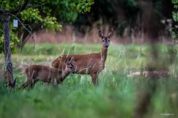 La faune de Chèvreloup se réveille