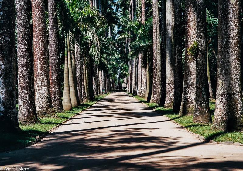Brazílie, Rio de Janeiro, Botanická, zahrada [Mart Eslem]