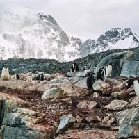 Vzpomínky na procházky mezi tučňáky(Mart Eslem)