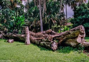 Toulání botanickou zahradou (Mart Eslem)