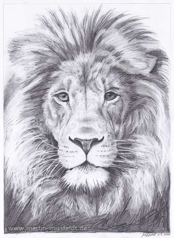 Lions Head Realistic Pencil Drawing