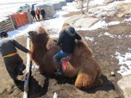Me finding my stirrups on my lovely camel
