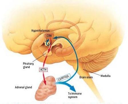högt kortisol behandling