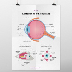 Poster anatomia do olho martinato