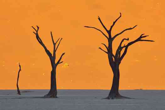 Moonlit Quiver Trees