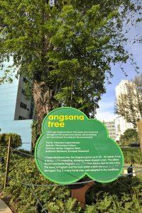 City_Square_Mall_Angsana_Tree_City_Green