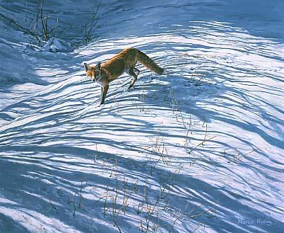 https://i2.wp.com/www.martinridley.com/images/fox_snowshad.jpg